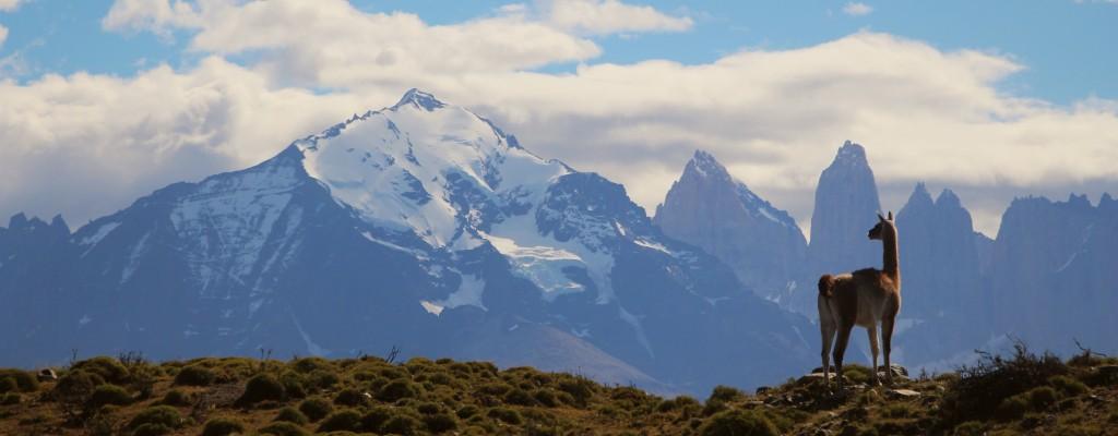 Lama in den Anden